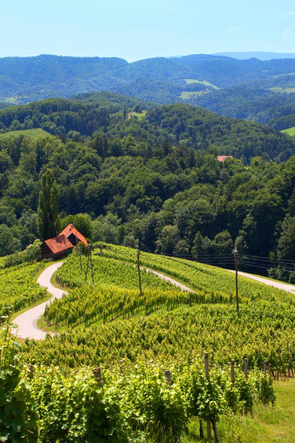 Romantic trip to Slovenia, wine road