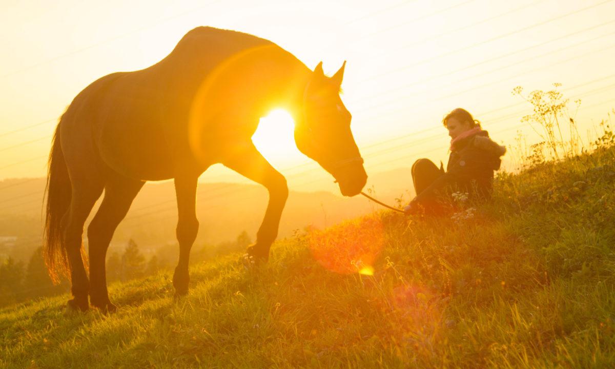 Horse riding, Slovenia
