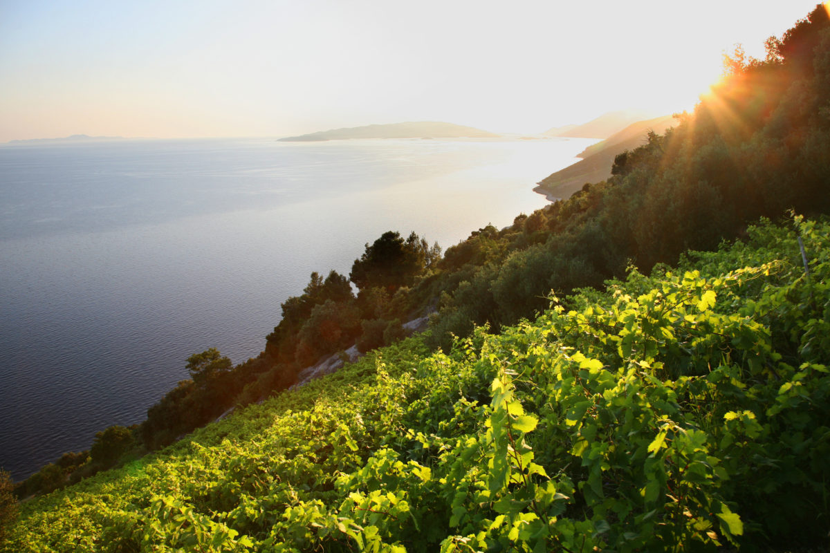 Food tour Croatia, Croatian wine