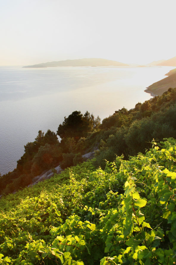 Food tour Croatia, Croatian wine