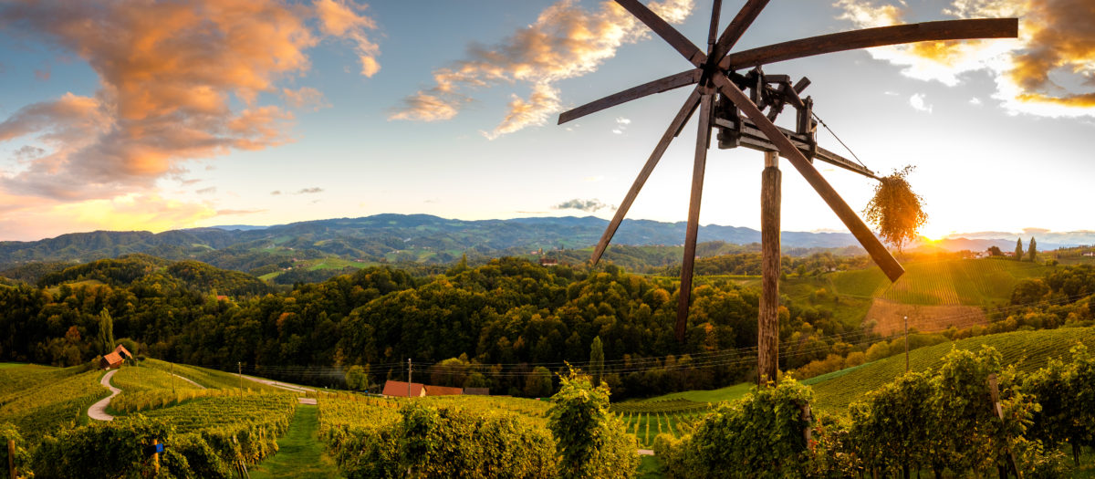 Gastronomy trip to Slovenia, Slovenian wine