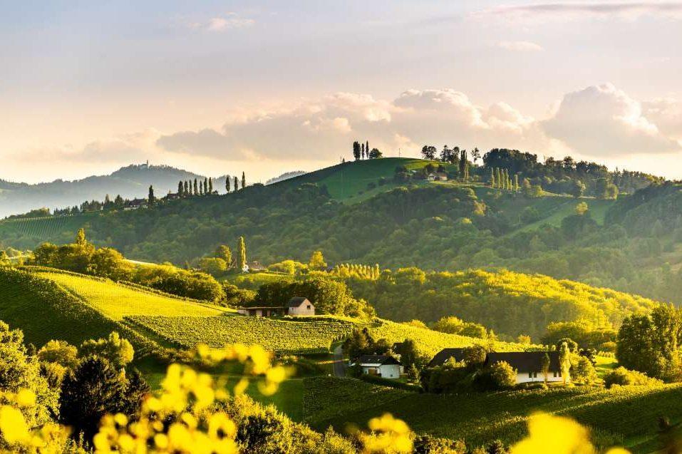 Slovenian wine landscape