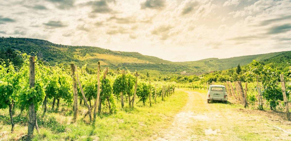 Slovenian wine tour