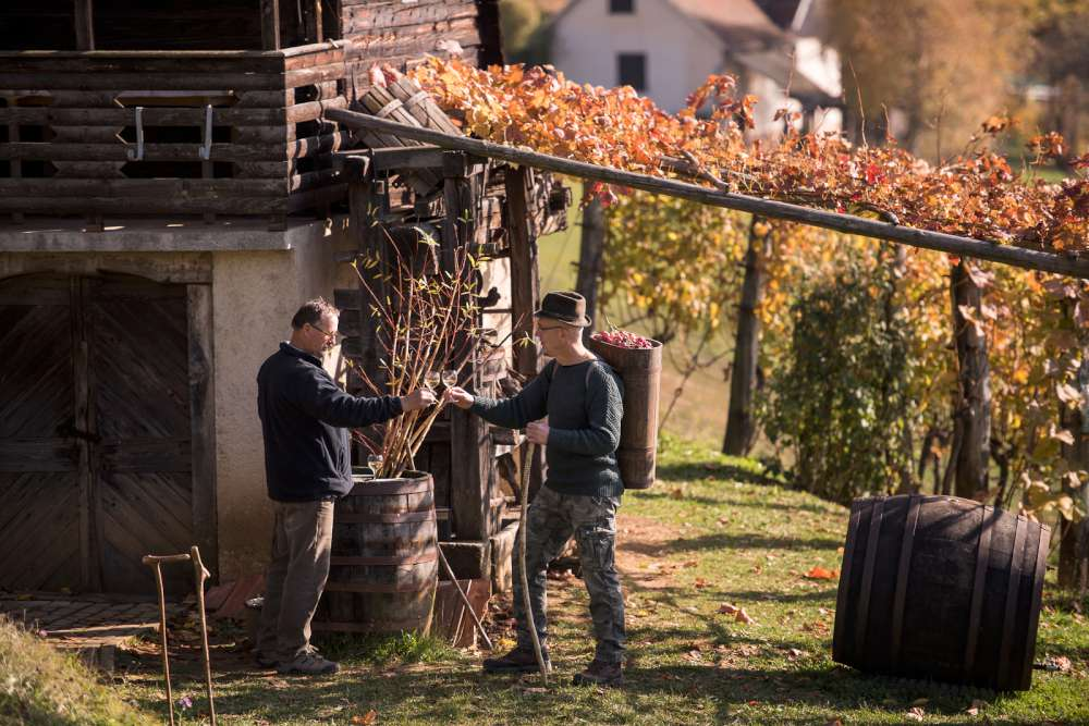 Slovenian wine tour