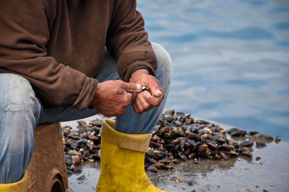 Romantic Croatia - oysters