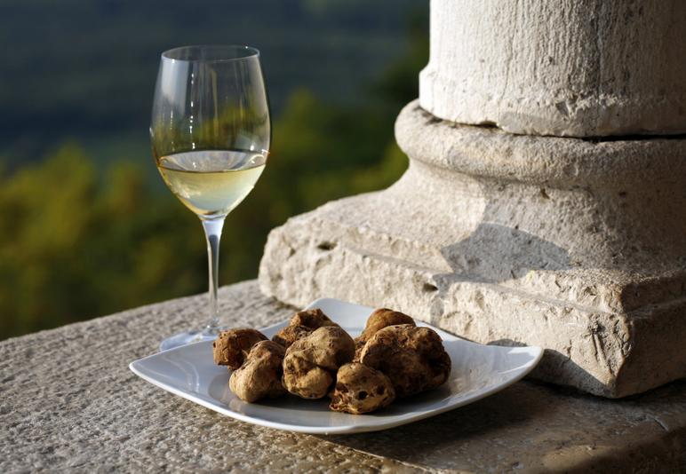 Buscar trufas en Istria